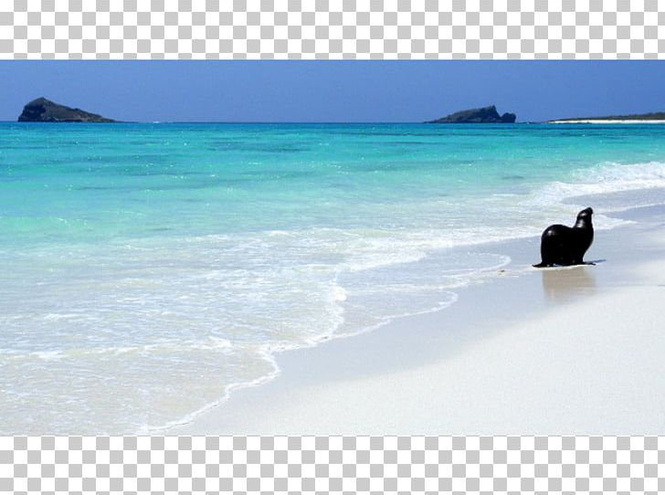 Ocean clipart coastal vector royalty free stock Caribbean Sea Beach Coast Ocean PNG, Clipart, Beach, Caribbean ... vector royalty free stock