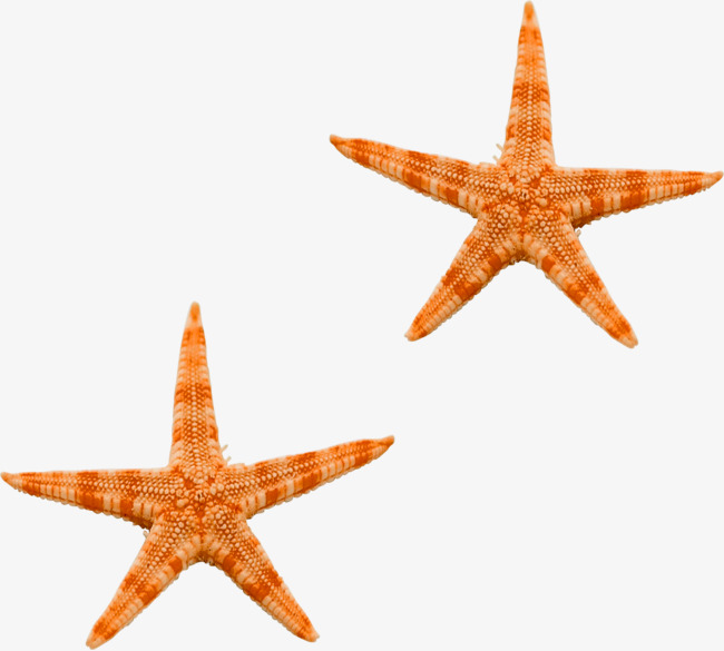 Ocean star clipart svg royalty free stock Star Ocean Clipart & Free Clip Art Images #34708 - Clipartimage.com svg royalty free stock