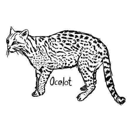 Ocelot clipart picture freeuse download Ocelot clipart » Clipart Portal picture freeuse download