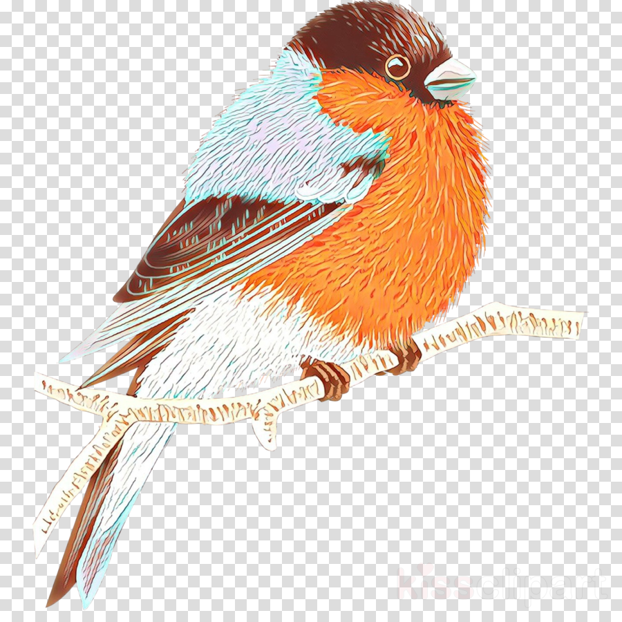 Old world clipart jpg royalty free library Old World Flycatchers, Fauna, Beak, transparent png image ... jpg royalty free library