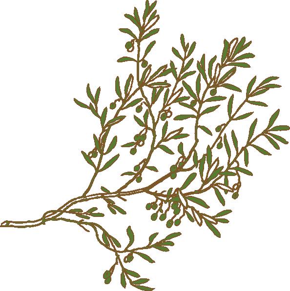 Olive tree clipart free clip art Olive Branch Clip Art at Clker.com - vector clip art online, royalty ... clip art
