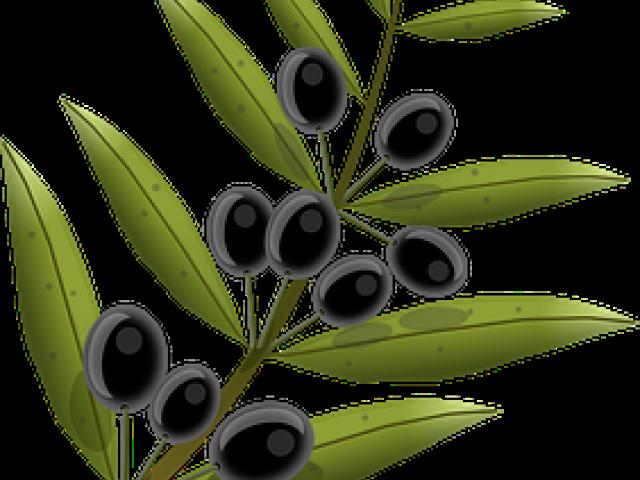 Olive tree clipart banner transparent download Olive Tree Clipart 22 - 1024 X 1024 | carwad.net banner transparent download