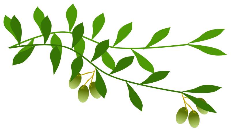 Olive tree clipart free banner library Clipart - olive branch banner library