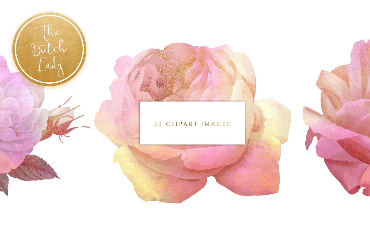 Olivia clipart graphic royalty free download Vintage Floral & Botanical Clipart - Olivia - Vsual graphic royalty free download