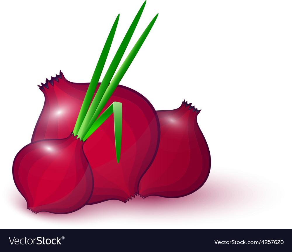 Onion vector clipart clipart freeuse Red onion vector image clipart freeuse