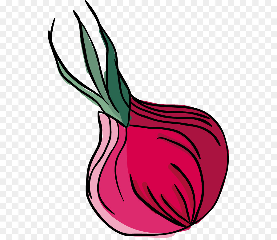 Onion vector clipart picture royalty free library Onion Vector at GetDrawings.com | Free for personal use ... picture royalty free library