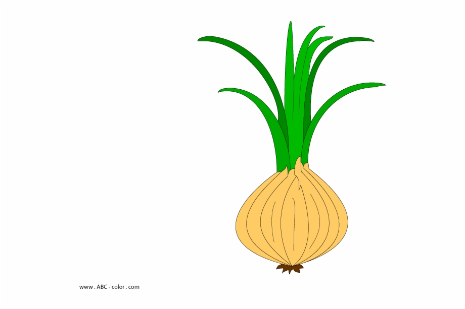Onion vector clipart picture black and white stock Clip Freeuse Stock Onion Vector Clipart - Лук Рисунок Для ... picture black and white stock