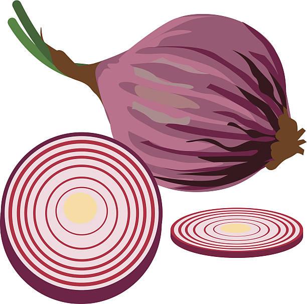 Onion vector clipart vector library stock 83+ Onion Clipart | ClipartLook vector library stock