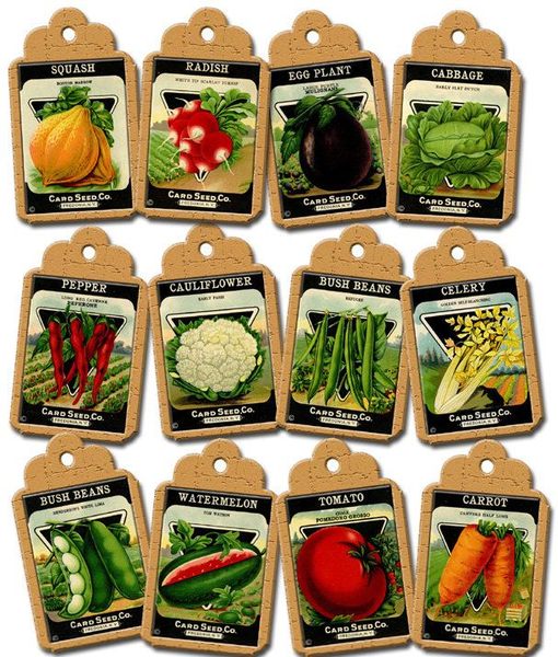 Open seed packets clipart picture royalty free library Vegetable and Fruit Gardening in SW Florida picture royalty free library