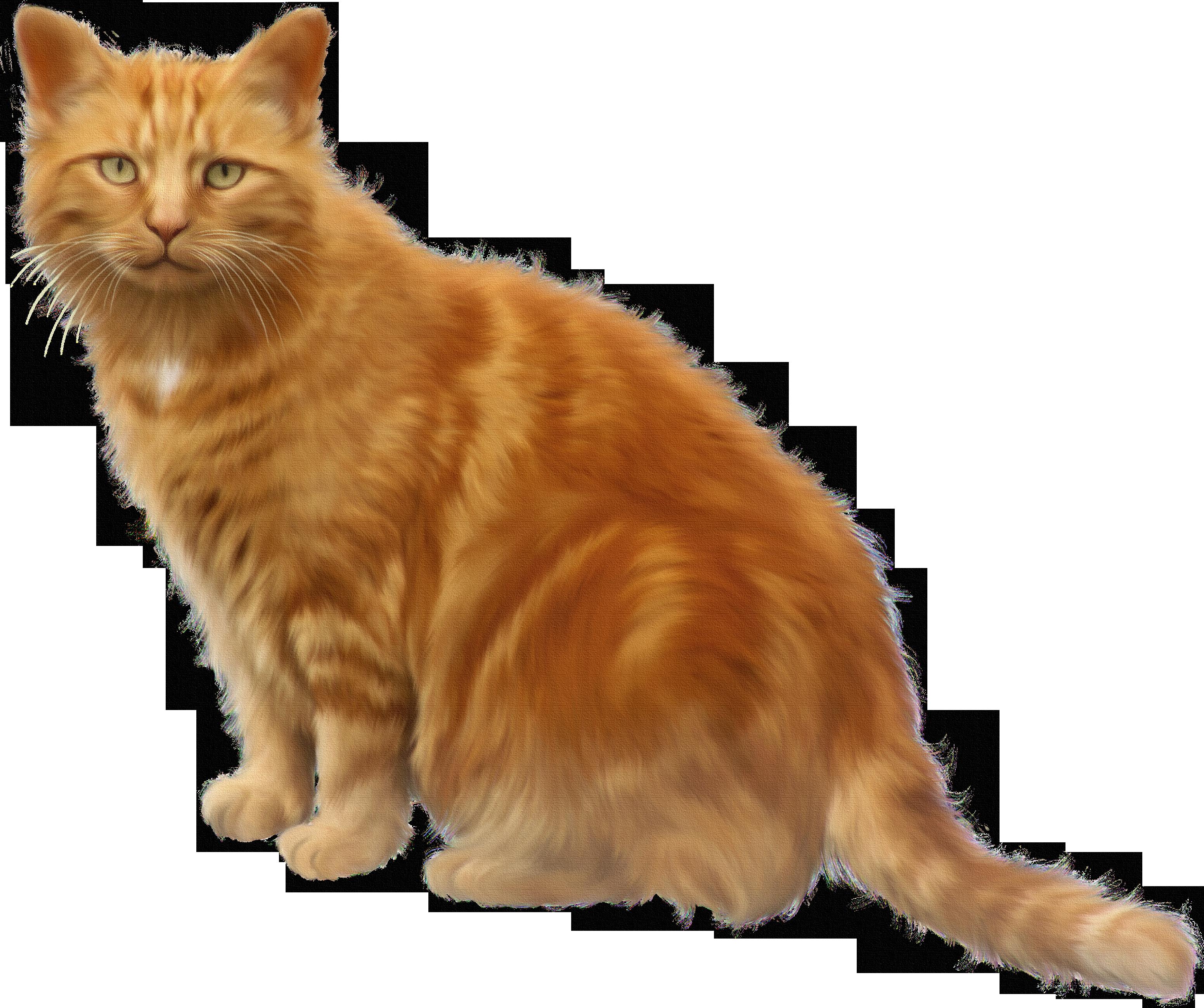 Orange and black cat clipart banner freeuse stock Kurilian Bobtail Black cat Clip art - Transparent bottom cat 3103 ... banner freeuse stock