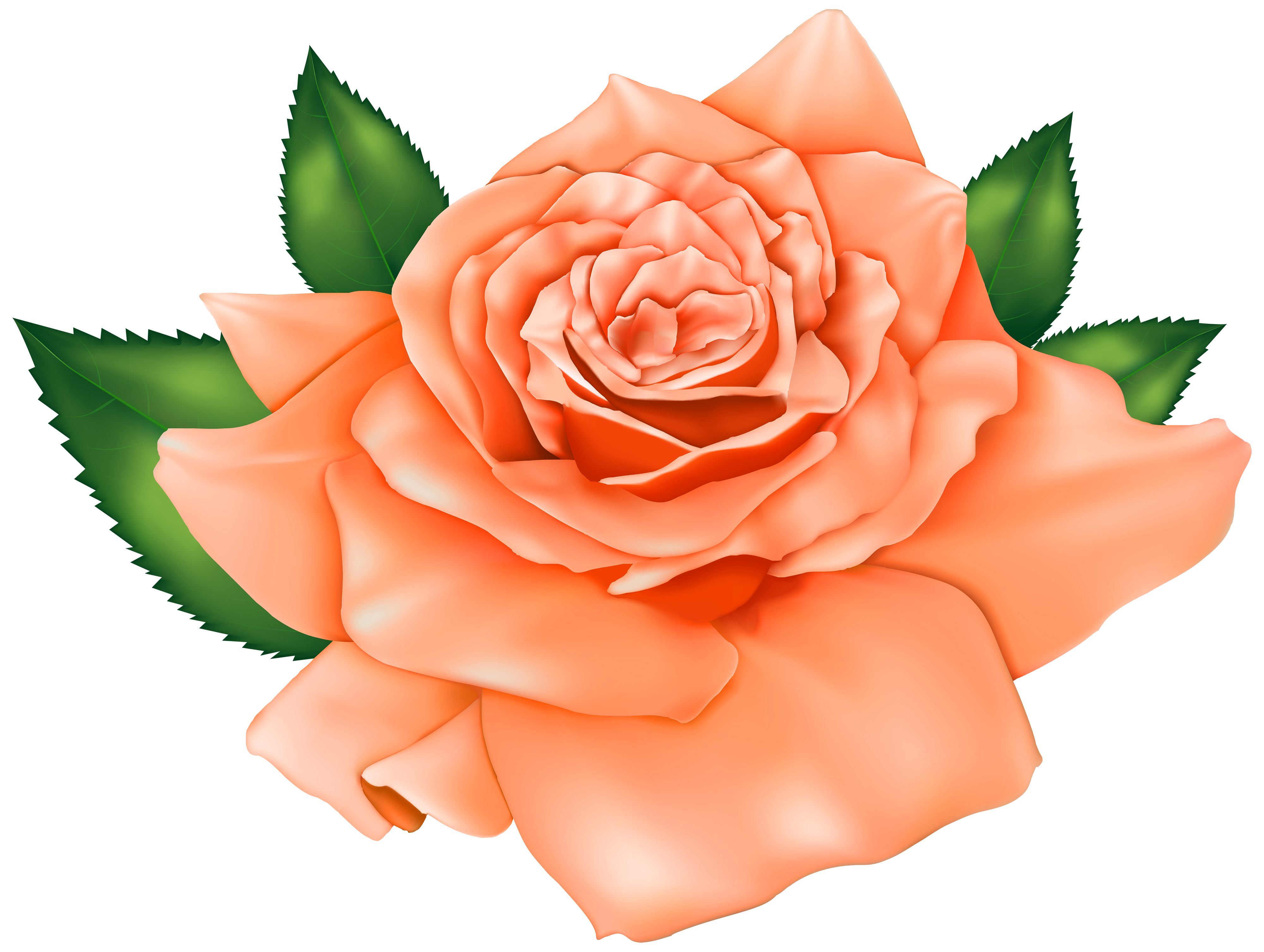 Peach flower clipart royalty free library Beautiful Orange Rose PNG Clipart - Best WEB Clipart royalty free library