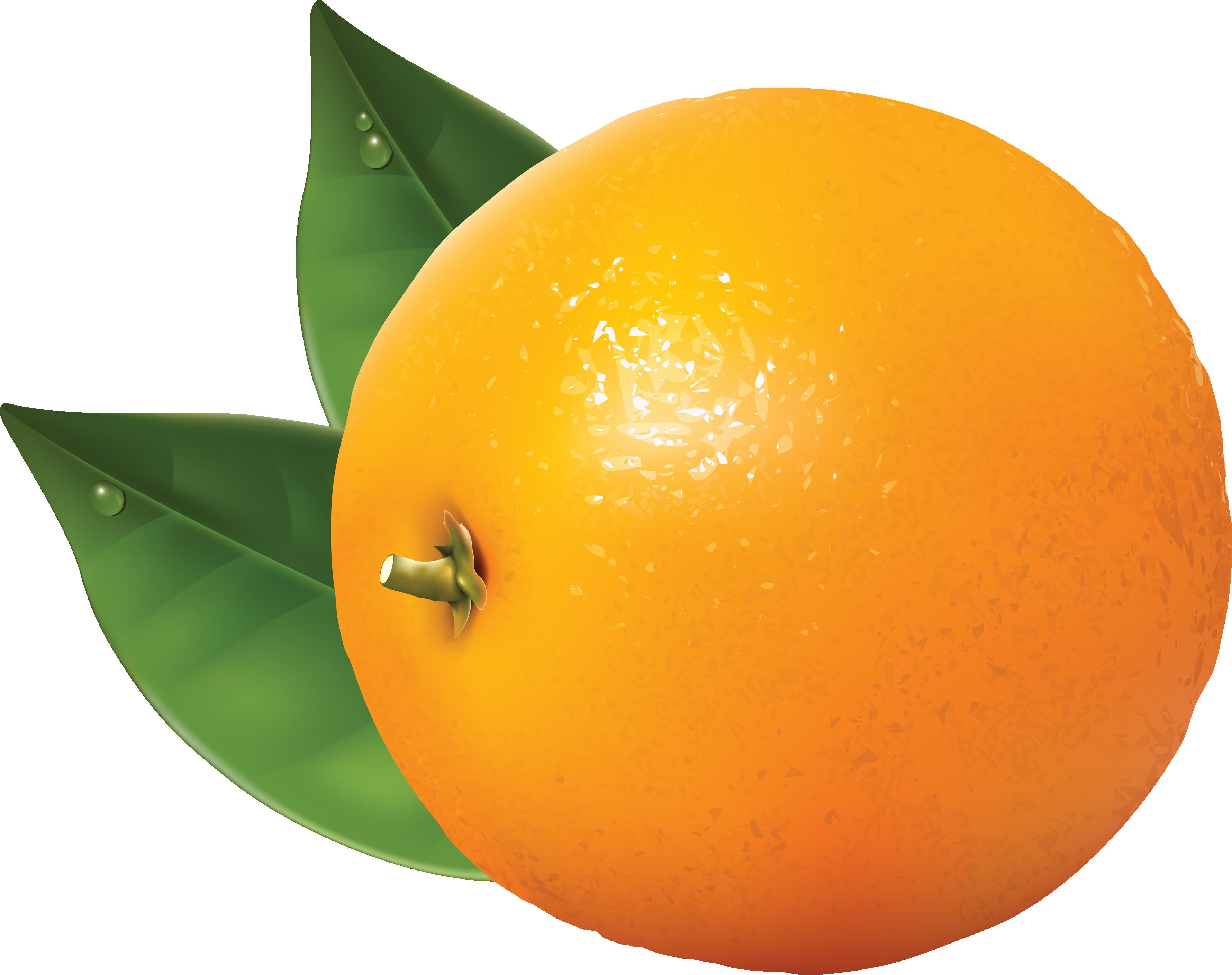 Orange free clipart png transparent download Orange Clip Art Free | Clipart Panda - Free Clipart Images png transparent download