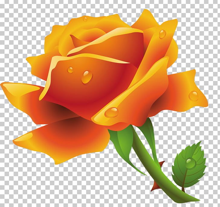 Orange yellow and white roses clipart clipart free stock Rose White PNG, Clipart, Computer Icons, Cut Flowers ... clipart free stock