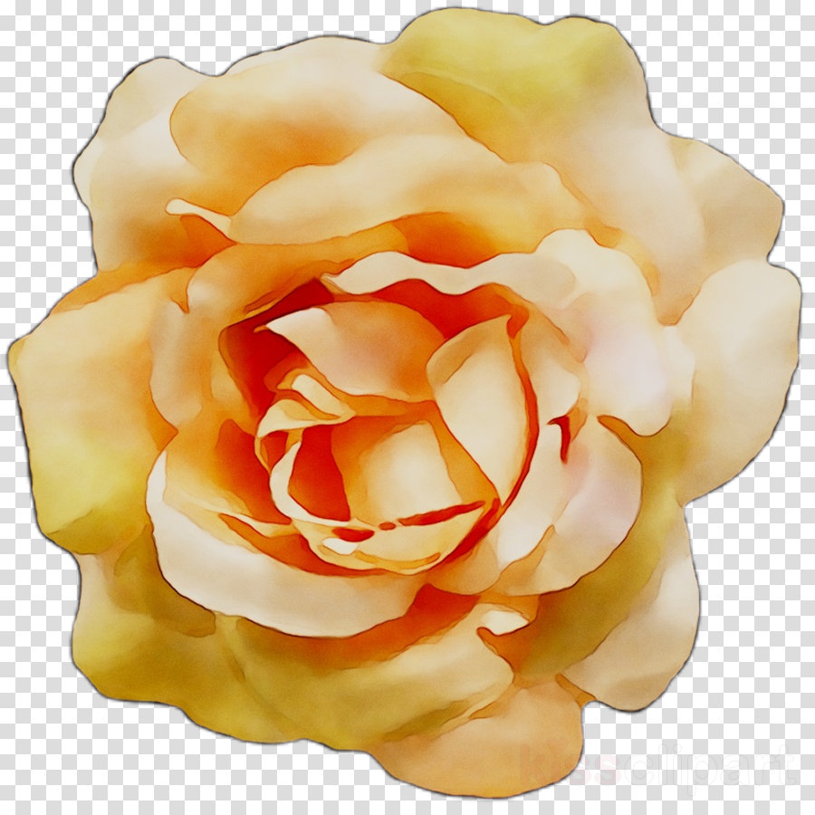 Orange yellow and white roses clipart clip art black and white library White Roses clipart - White, Orange, Flower, transparent ... clip art black and white library
