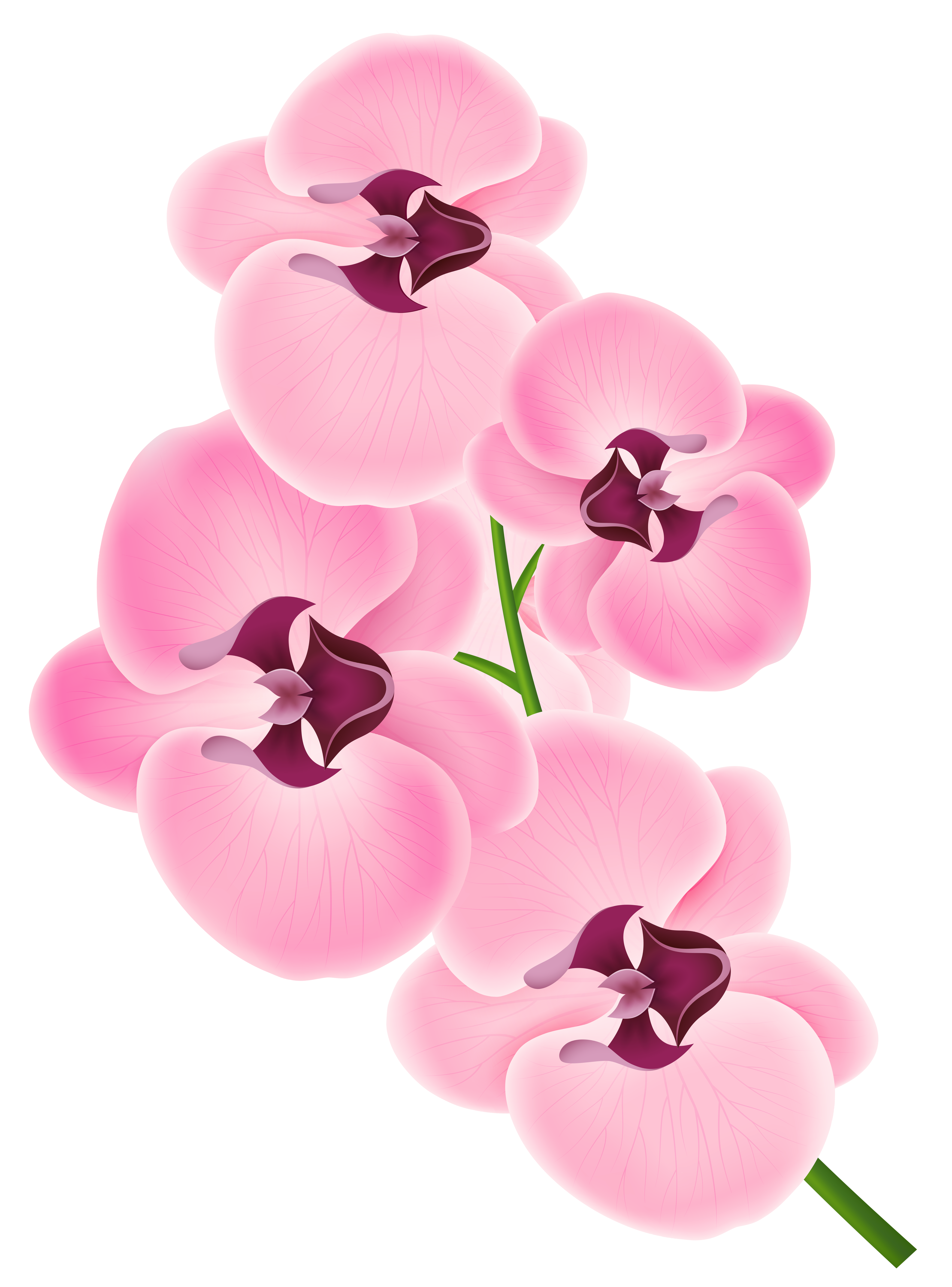 Orchad clipart graphic freeuse stock Free Orchid Cliparts, Download Free Clip Art, Free Clip Art on ... graphic freeuse stock