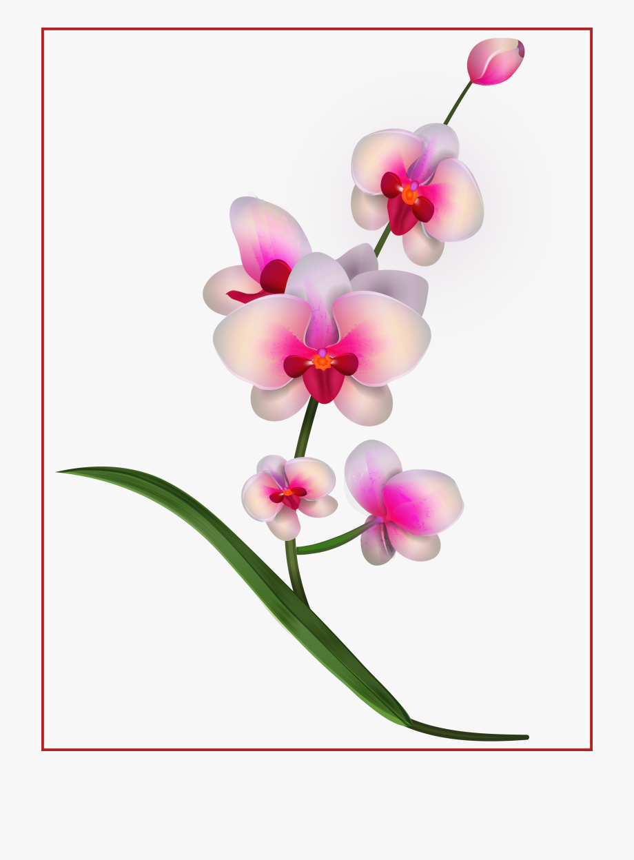 Orchid clipart images banner royalty free download At Getdrawings Com Free - Orchid Clipart #683451 - Free Cliparts on ... banner royalty free download