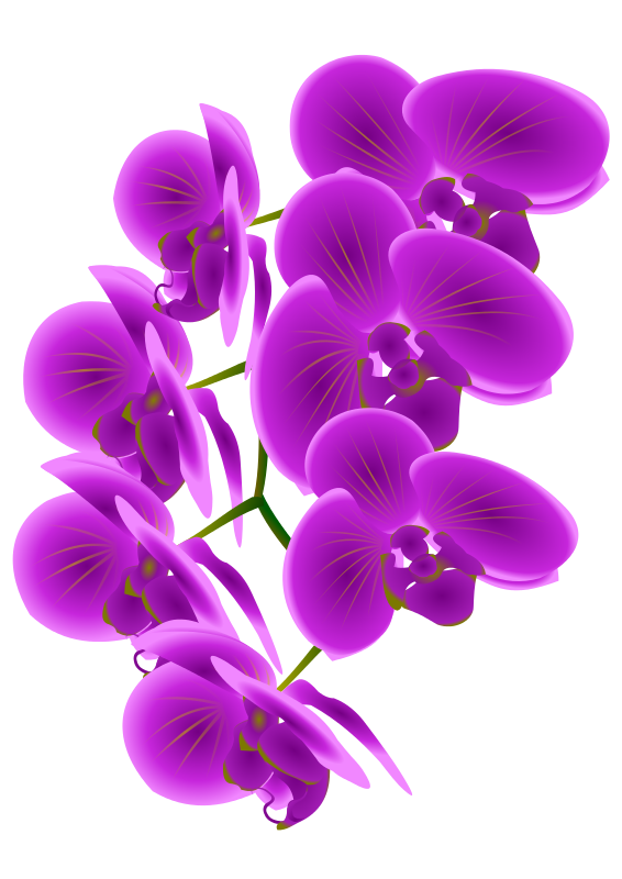 Orchid clipart images image royalty free stock Free Clipart: Orchid Branch | bnielsen image royalty free stock