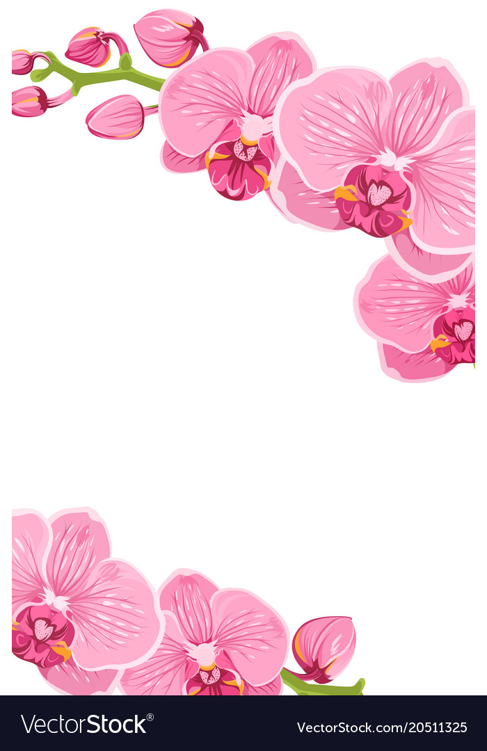 Orchid border clipart clip art transparent library Pink orchid flowers border frame template card vector image clip art transparent library