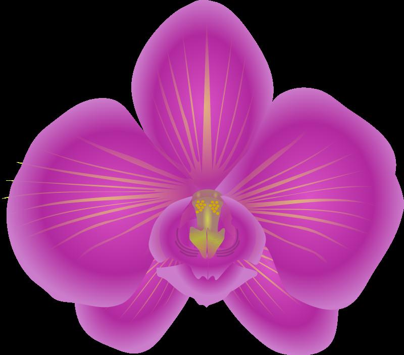 Orchid clipart images banner transparent library 83+ Orchid Clipart | ClipartLook banner transparent library