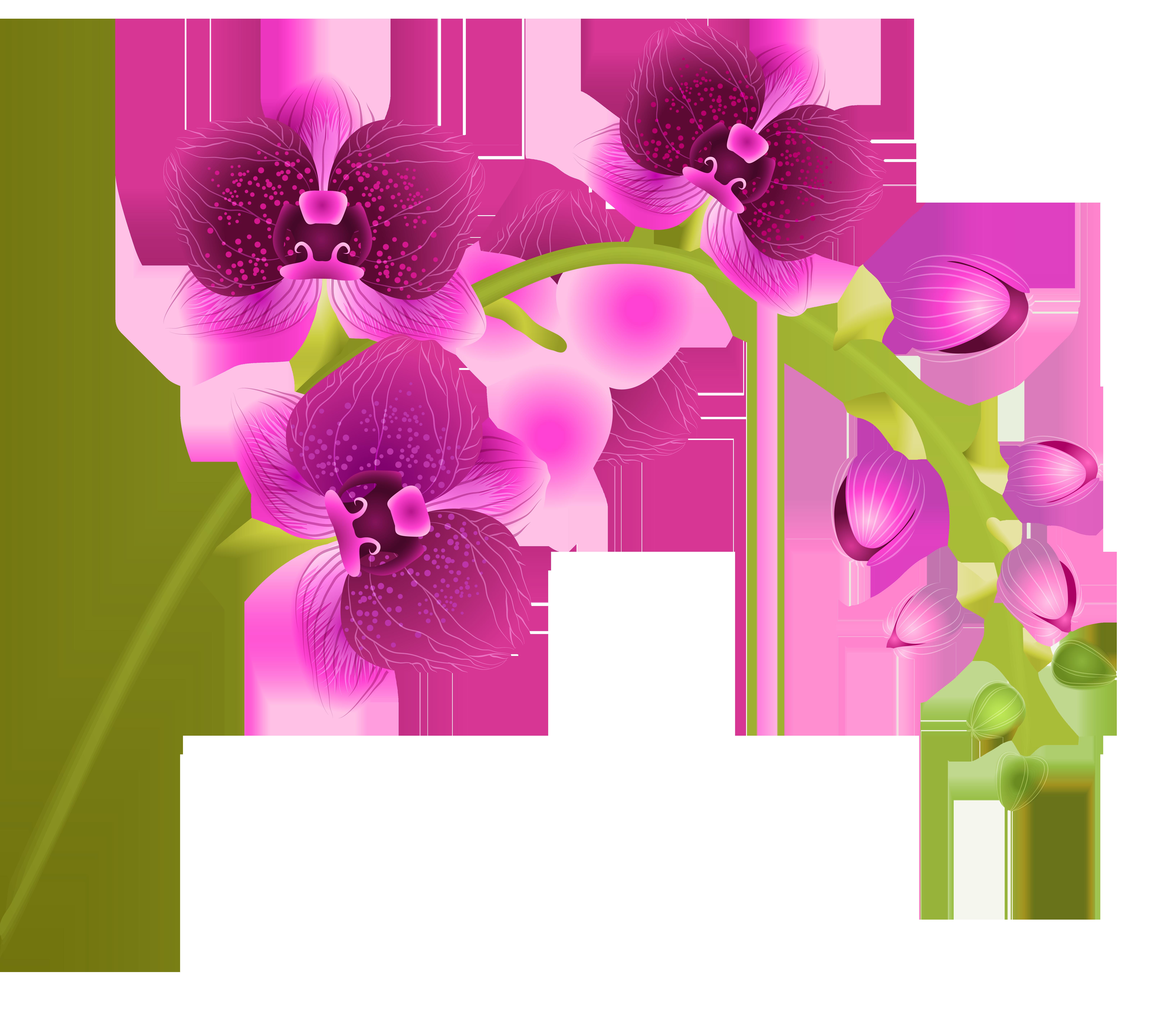 Orchid clipart images clip Orchid Flower Transparent PNG Clip Art Image | Gallery ... clip