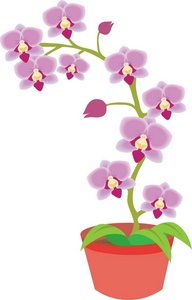 Orchid clipart images jpg free download Free Columbian Orchid Cliparts, Download Free Clip Art, Free ... jpg free download