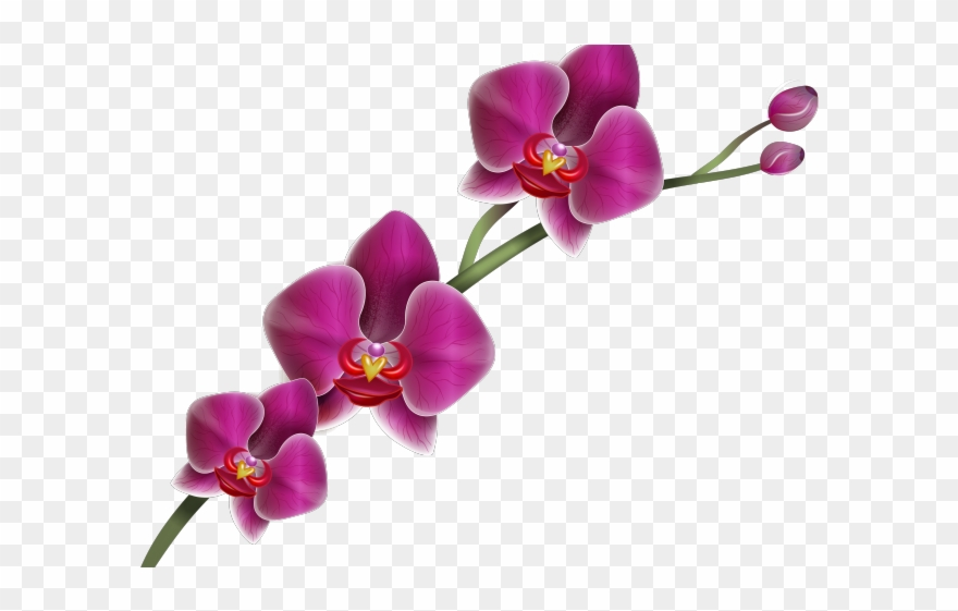 Orchid clipart images image black and white download Orchid Clipart Hawaiian Orchid - Orchid Png Transparent Png ... image black and white download