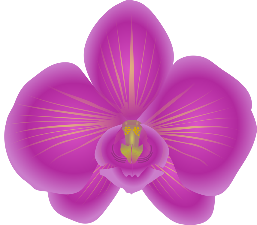 Orchid flower clipart svg download Dendrobium Orchids Flowering plant free commercial clipart - Orchids ... svg download