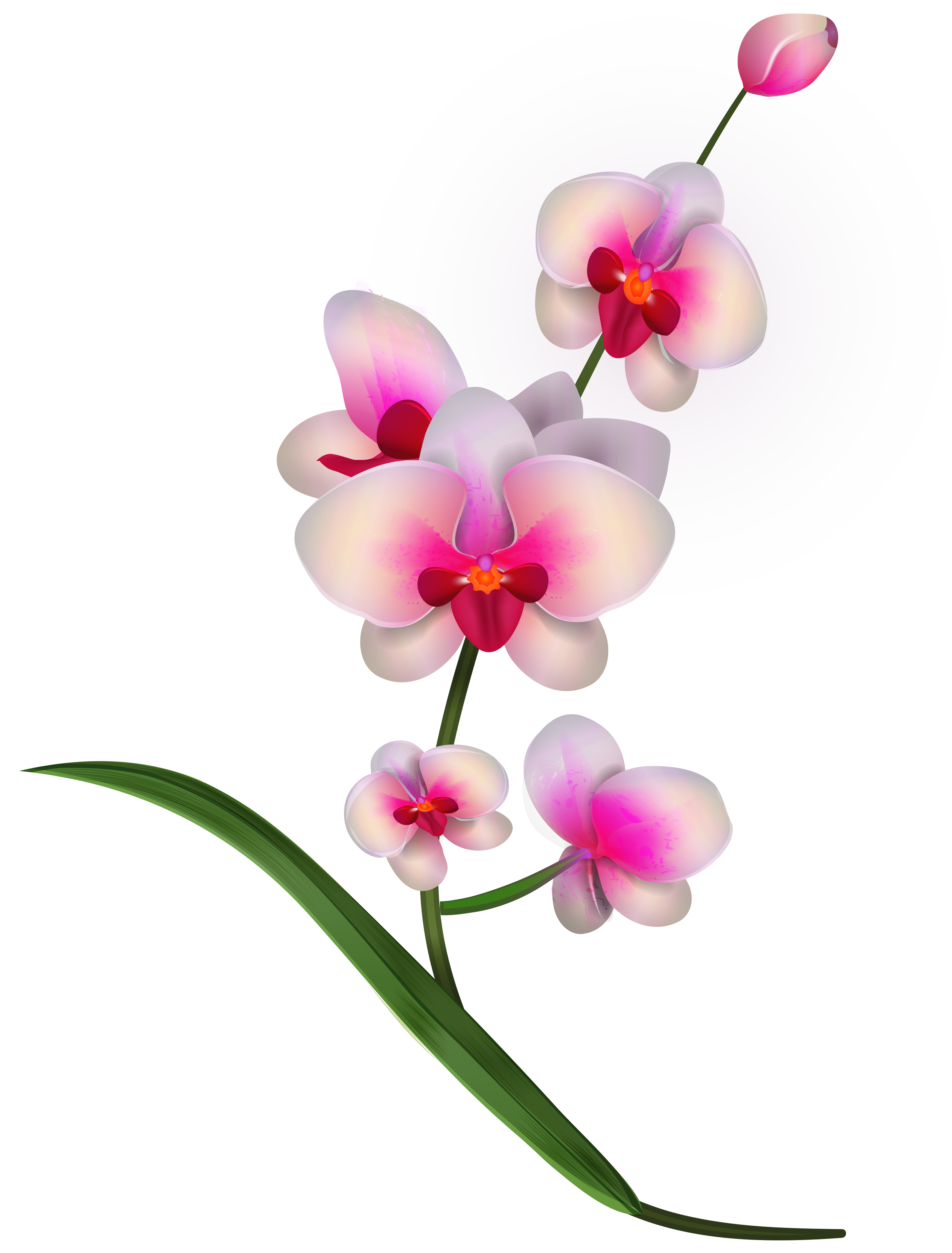 Orchid flower clipart image black and white library Orchid Clipart PNG Image   flowers   Pinterest   Orchid and Flowers image black and white library