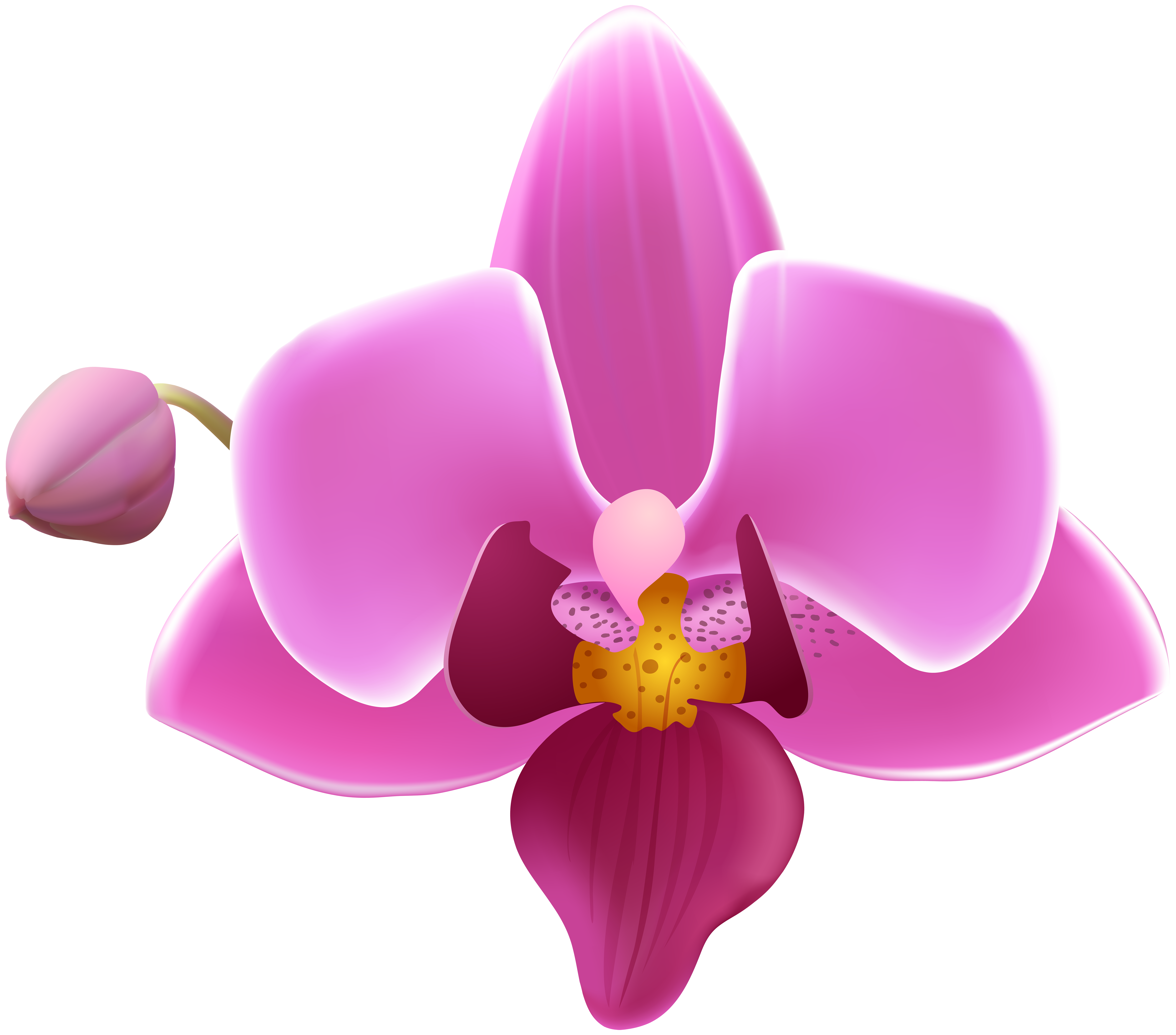Orchid flower clipart image freeuse library Orchid Flower Transparent Image   Gallery Yopriceville - High ... image freeuse library