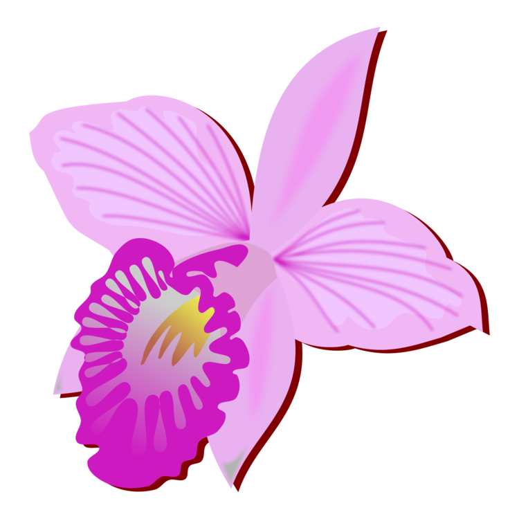 Orchid flower clipart image stock Bamboo orchid Cut flowers Drawing Orchids free commercial clipart ... image stock