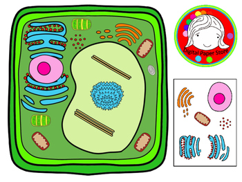 Homeschool clipart plant cell jpg freeuse Plant Cell and Organelles Clipart (Personal & Commercial Use) jpg freeuse