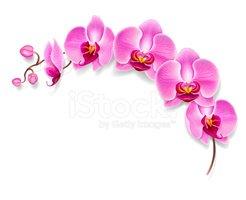 Orkide clipart freeuse Çiçek stok vektörleri - Clipart.me freeuse