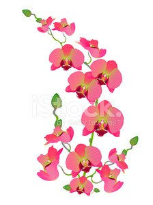 Orkide clipart clip art stock Orkide premium clipart - ClipartLogo.com clip art stock