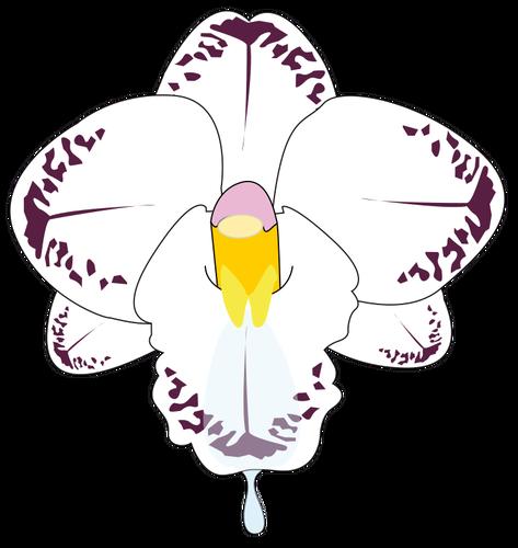 Orkide clipart image library stock ClipArt-bilder av vild orkidé i färg | Public domain vektorer image library stock