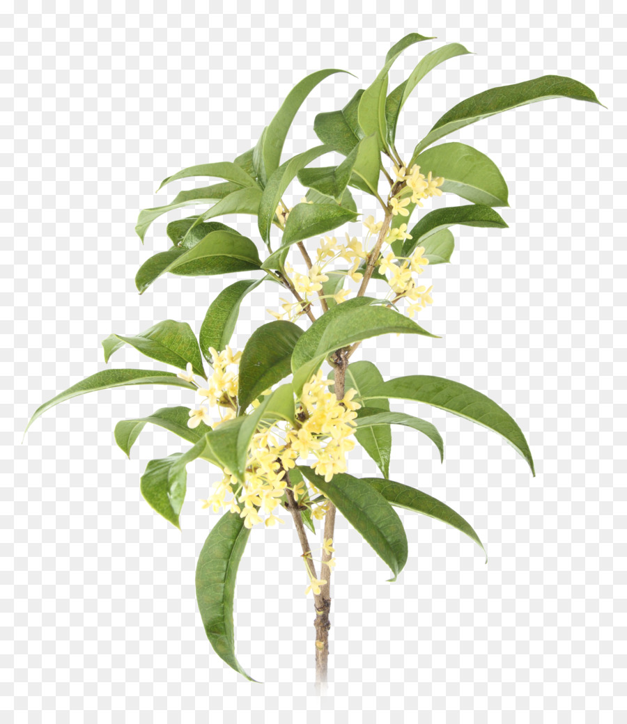 Osmanthus clipart clip black and white stock Flowers Clipart Background png download - 2560*2957 - Free ... clip black and white stock