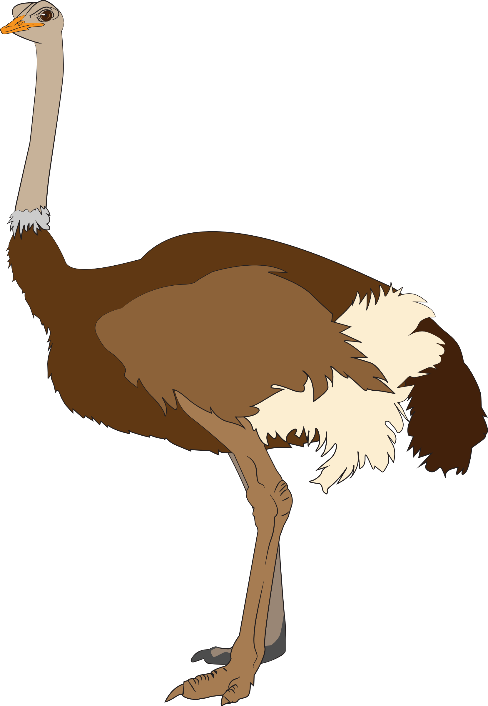 Ostritch clipart picture library stock Ostrich Vector Clipart image - Free stock photo - Public ... picture library stock