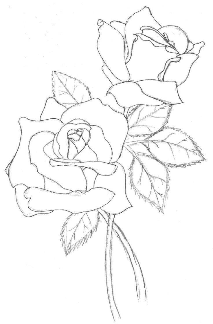 Outline images of flowers svg transparent library 17 best ideas about Flower Outline on Pinterest | Flower outline ... svg transparent library