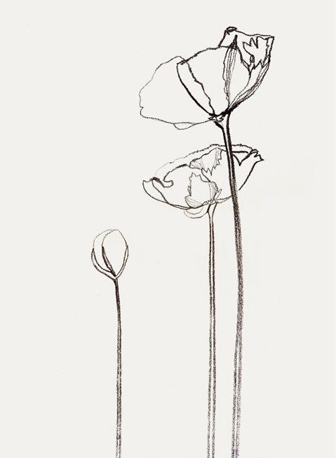 Outline images of flowers graphic library 17 best ideas about Flower Outline on Pinterest | Flower outline ... graphic library