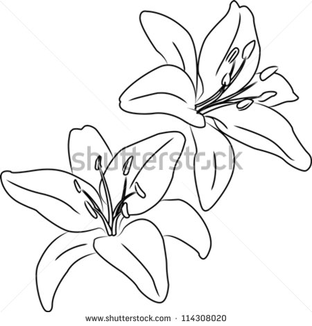 Outline images of flowers png library Flower Outline Stock Images, Royalty-Free Images & Vectors ... png library