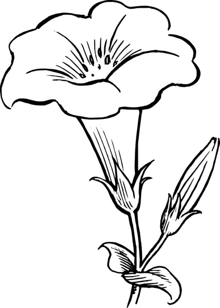 Library of outline images of flowers png files