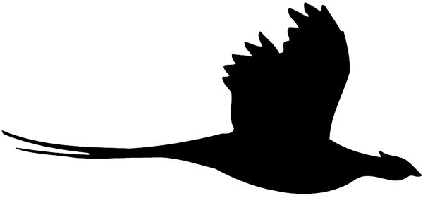 Outline of a pheasant in flight clipart png freeuse download Pheasant silhouette   Silhouettes   Pheasant hunting ... png freeuse download