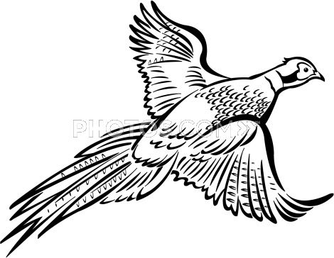Outline of a pheasant in flight clipart png download dog and pheasant - Google Search   Fig Tales - KickStarter ... png download