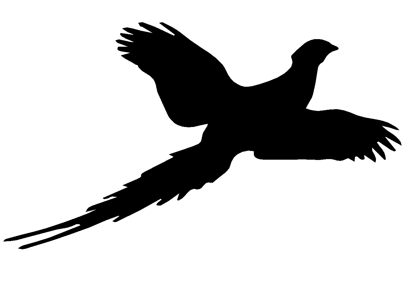 Outline of a pheasant in flight clipart clip freeuse stock Collection of Pheasant clipart   Free download best Pheasant ... clip freeuse stock