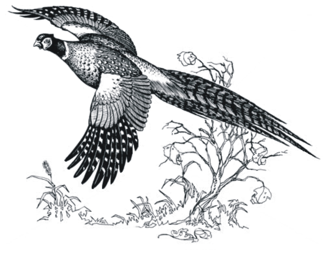 Outline of a pheasant in flight clipart picture royalty free download 48+ Pheasant Clip Art   ClipartLook picture royalty free download