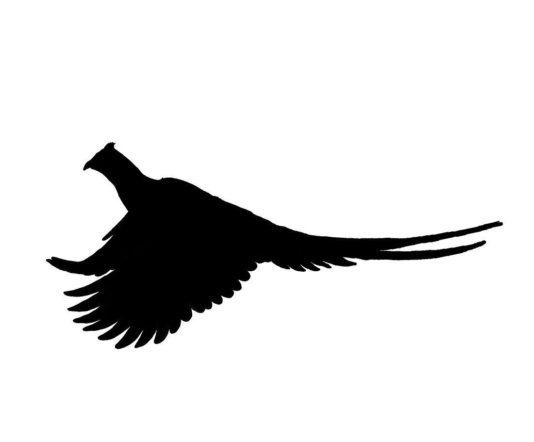 Outline of a pheasant in flight clipart banner transparent download Running Rooster Pheasant Silhouette, Pheasant Hunting Decal ... banner transparent download