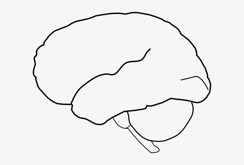 Outline of side of brain and brainstem clipart vector library Brain Clipart - Outline Drawing Of The Brain PNG Image ... vector library