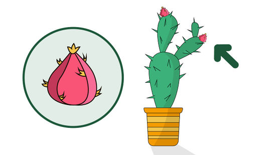 Outside house cactus clipart free to use png black and white download How to Grow a Cactus: 15 Steps (with Pictures) - wikiHow png black and white download