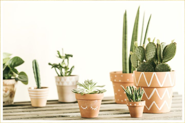 Outside house cactus clipart free to use jpg library download 14 Types of Cactus for Your Home and Garden - FTD.com jpg library download