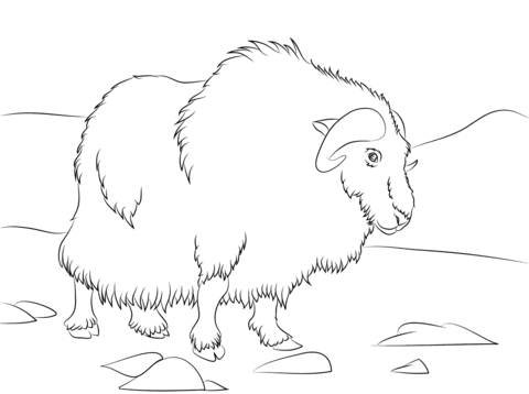 Ox clipart coloring royalty free download Musk Ox coloring page | Free Printable Coloring Pages royalty free download