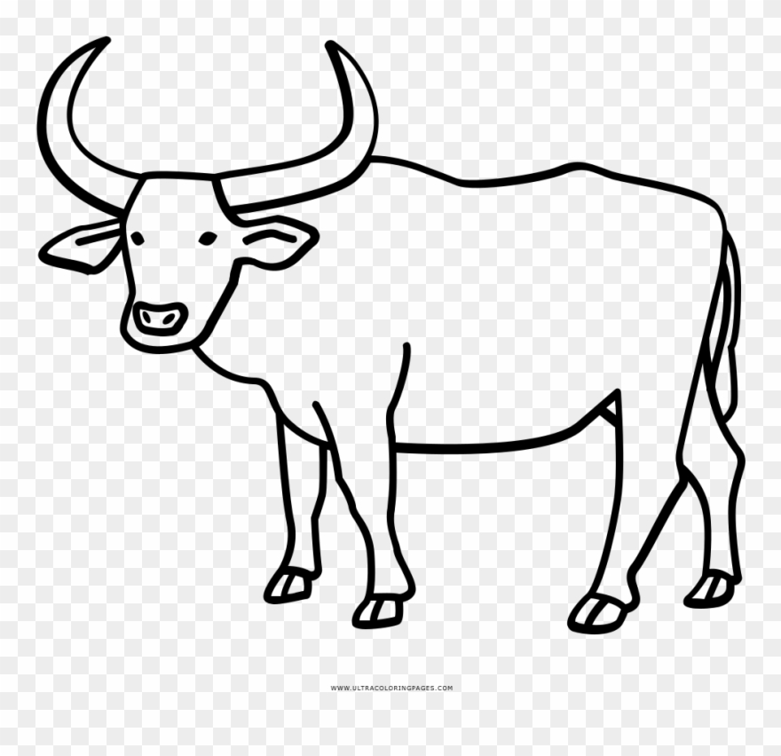 Ox clipart coloring jpg library library Buffalo Coloring Page With Water Ultra Pages - Drawing Ox ... jpg library library
